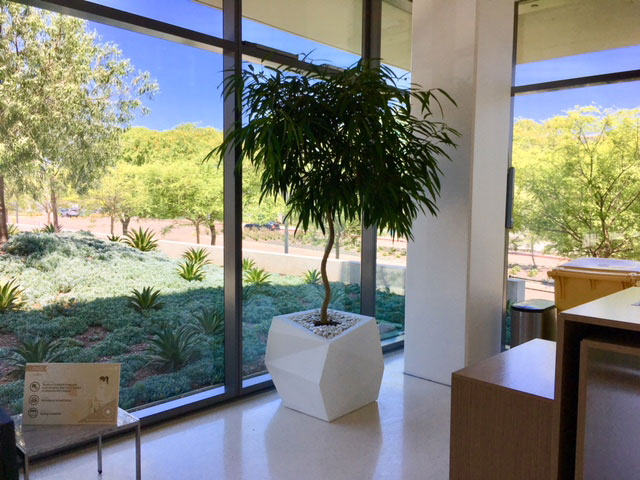 Good Earth Plant Company Plant Styling With Indoor Trees Good