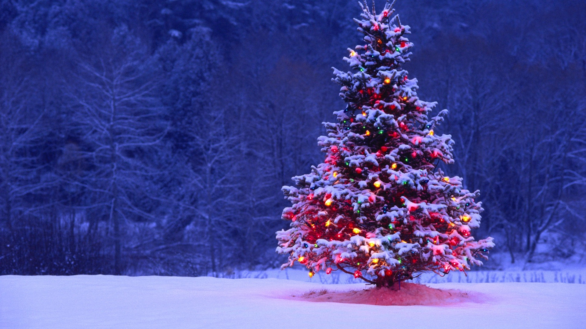 Caring For Your Christmas Tree Debunking The Myths Good Earth Plants