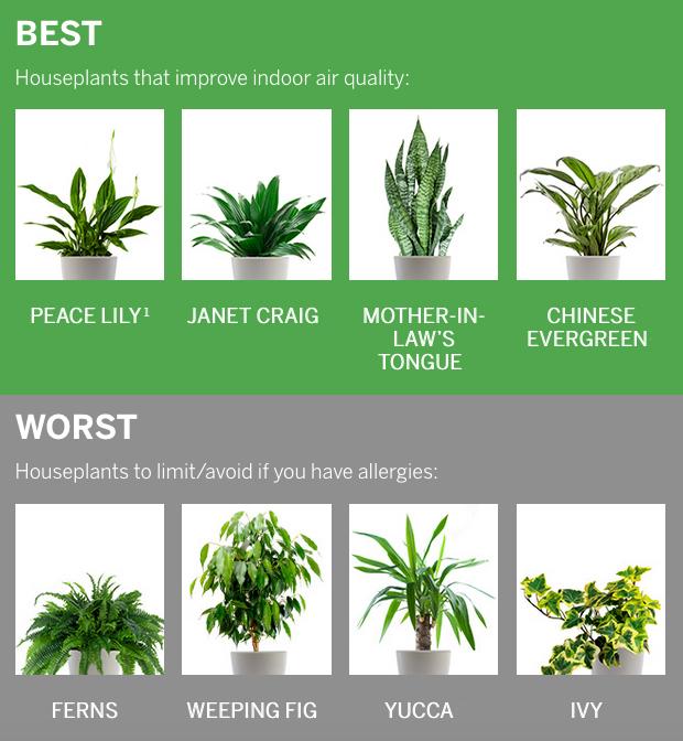 what is an indoor allergies